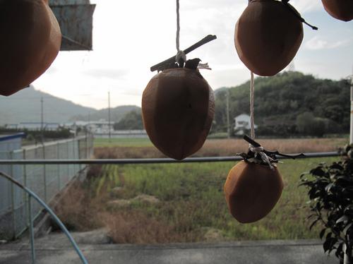 teshima_11_12.jpg