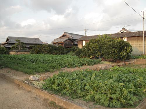 teshima_11_4.jpg